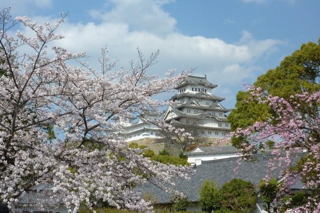 04 e1334494925167 Japán cseresznyefa virágzás
